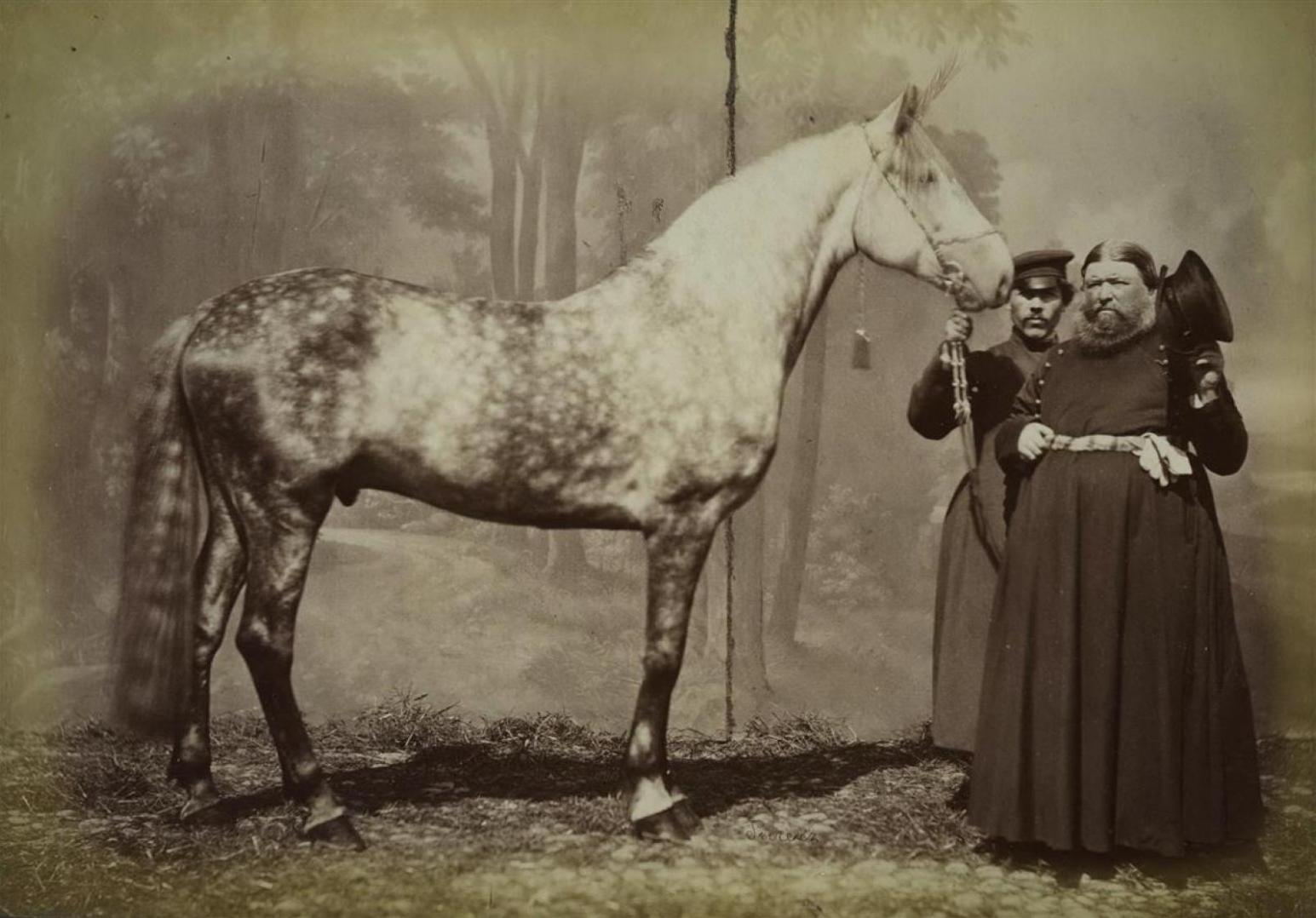 Собрание конных и военных дореволюционных снимков