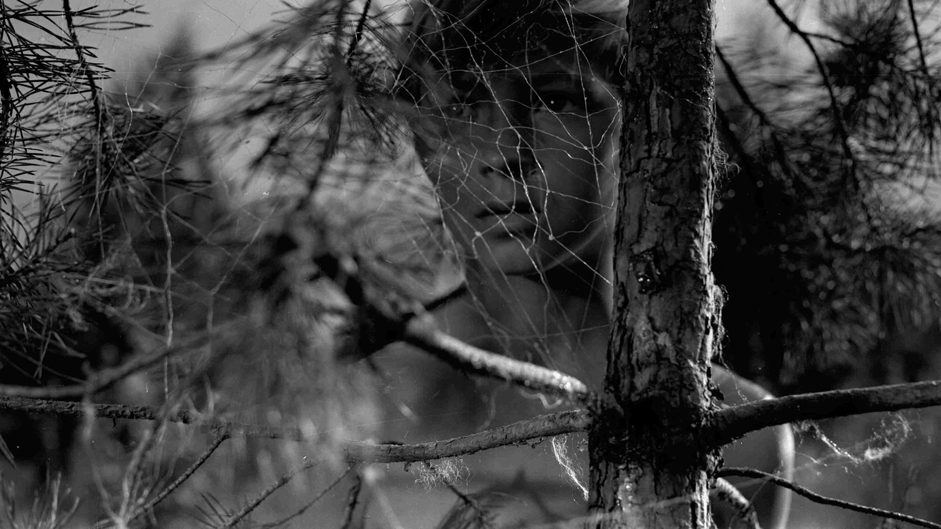 Кадр из фильма Андрея Тарковского «Иваново детство», 1962